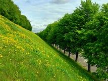 Allée des arbres verts au pied de l'herbe verte et de la colline jaune de fleurs photo libre de droits