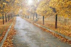 Allée en automne avec un banc pendant le matin photos stock