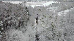 allée en bois d'hiver couvert de neige avec une route banque de vidéos