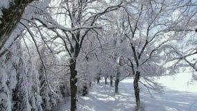 Allée en hiver avec les arbres neigeux clips vidéos