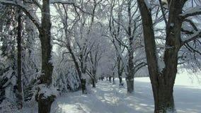Allée en hiver avec les arbres neigeux banque de vidéos