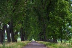 Allée en parc Photo libre de droits