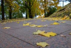Allée en parc en automne Photo stock