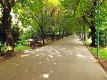 Allée en parc de Cismigiu Image libre de droits