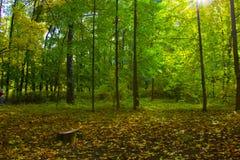 Allée en parc ensoleillé d'automne photographie stock