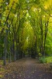 Allée en parc ensoleillé d'automne photographie stock libre de droits