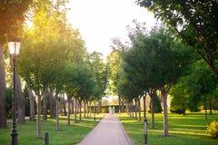 Allée et arbres de parc Photo stock