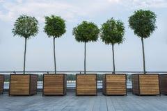 Allée et ciel d'arbre en été Image stock