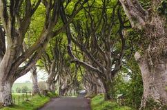 Allée majestueuse d'arbre Images libres de droits