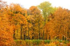 Allée orange de lame d'érable d'automne Image stock