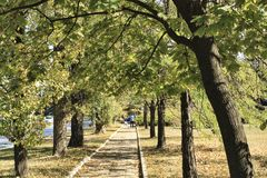 Allée parmi les arbres photo libre de droits
