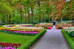 Allée parmi les tulipes colorées, parc de Keukenhof, Lisse en Hollande photographie stock