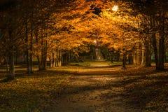 Allée pendant la nuit Image libre de droits
