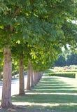 Allée verte avec des arbres Photos libres de droits