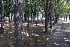 Allée verte avec des arbres en parc Images stock