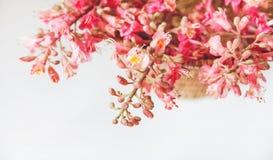 Allí las ramas rosadas del árbol de castaña están en la tabla blanca, foco selectivo, fondo Imágenes de archivo libres de regalías
