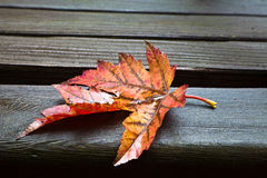 Free All Alone (Fall Leaf) Stock Image - 22474241