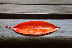 All Alone (Fall Leaf) Stock Images