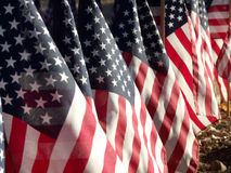 All American. American Flags, in a row, honoring war veterans Royalty Free Stock Images