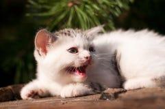 All'aperto di due mesi del gattino sveglio Immagine Stock
