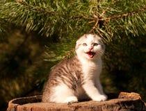 All'aperto di due mesi del gattino sveglio Fotografia Stock