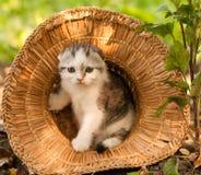 All'aperto di due mesi del gattino sveglio Fotografia Stock Libera da Diritti