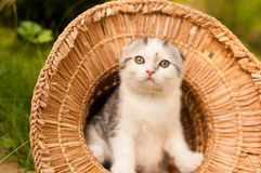All'aperto di due mesi del gattino sveglio Immagini Stock