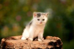 All'aperto di due mesi del gattino sveglio Immagine Stock Libera da Diritti