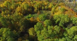 All'aperto prato fra il paesaggio della foresta di autunno video d archivio