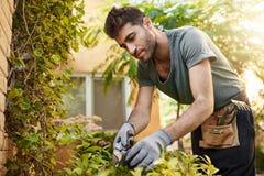 All'aperto ritratto di giovane uomo ispanico barbuto attraente in maglietta blu e dei guanti che lavorano nel giardino con gli st Immagine Stock Libera da Diritti