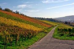 All'aperto stagione di caduta del paesaggio della vigna Autumn Orange Yellow Gre Fotografia Stock Libera da Diritti