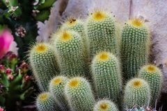 All cactus Stock Photography