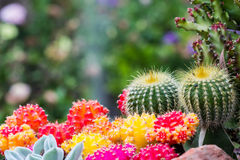 All cactus Stock Images