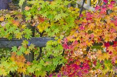 All Colors in Autumn Season. In JAPAN Royalty Free Stock Photography