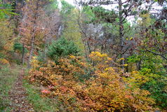 All the colors of the forest, italy Royalty Free Stock Photography
