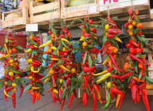 All the colors of paprika. Picturesque bunches  of paprika of different colors: red, green, yellow, orange. At a market Stock Photos