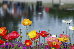 All the colors of the rainbow. Various flowers are opening in spring Stock Images