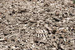 All dead animal bones Stock Image
