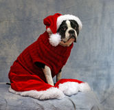 All dressed up for Christmas Stock Photo