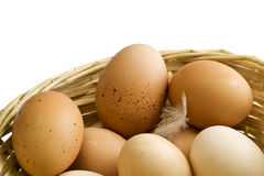 All eggs in one basket Stock Photography