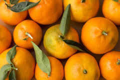 All filled with tangerines, citrus fruits Royalty Free Stock Images
