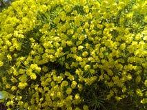 All fokus, blomma, guling, natur, fält, vår, växt royaltyfria foton
