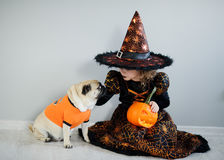 All Hallows Eve. Little girl in suit of the evil sorcerer sits on floor and irons an amusing pug. All Hallows Eve. Little girl in a suit of the evil sorcerer stock photography