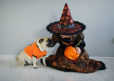 All Hallows Eve. Little girl in suit of the evil sorcerer sits on a floor and irons an amusing pug. All Hallows Eve. Little girl in a suit of the evil sorcerer royalty free stock photo