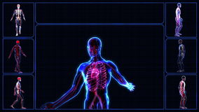 All human body systems stock footage