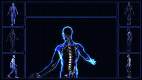 All human body systems stock video footage