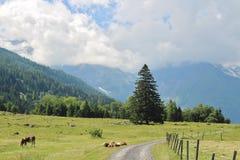 All'inizio di alta strada alpina di Grossglockner, Ferleiten, Austria Immagine Stock Libera da Diritti