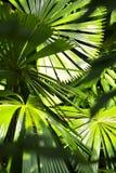 All'interno della giungla Fotografia Stock