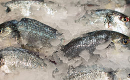 All kinds of frozen fish. Stock Image
