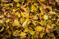 All leaf fall. In rainy season Royalty Free Stock Images